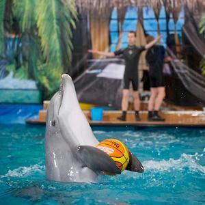Дельфинарии, океанариумы Фокино