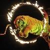 Цирки в Фокино