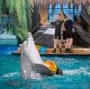 Дельфинарии, океанариумы в Фокино