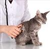Ветеринарные клиники в Фокино